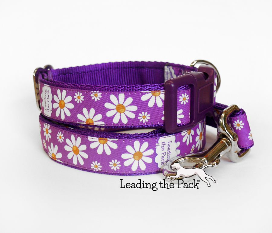 20/25mm daisies collars & leads