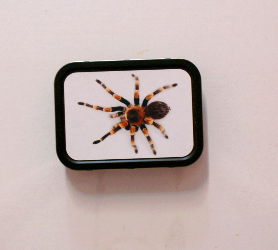 Small Spider Tin