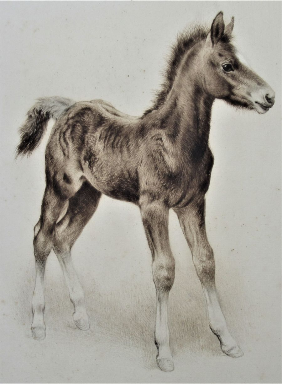 Original print, drypoint engraving, Study of a Foal, indistinctly signed, c1930