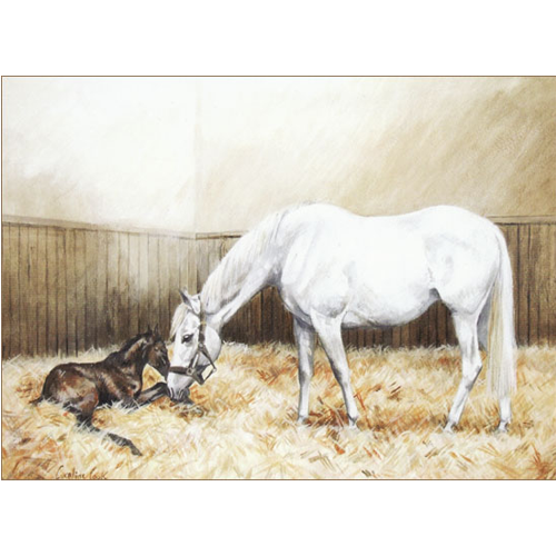 Gray Mare And Foal