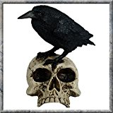 Nemesis Now Raven on Skull Figurine
