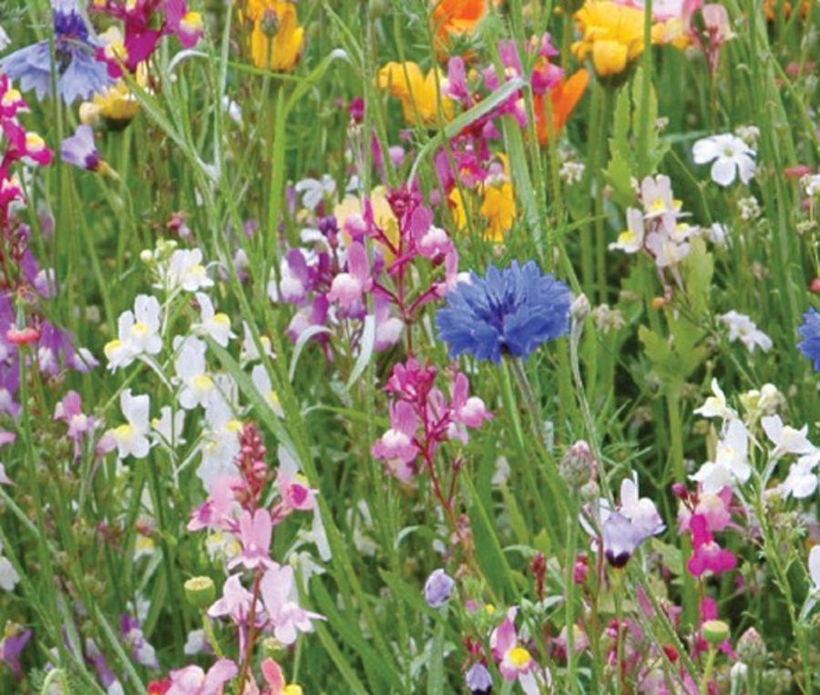Pro Flora 6 - Dry, Loamy Soils