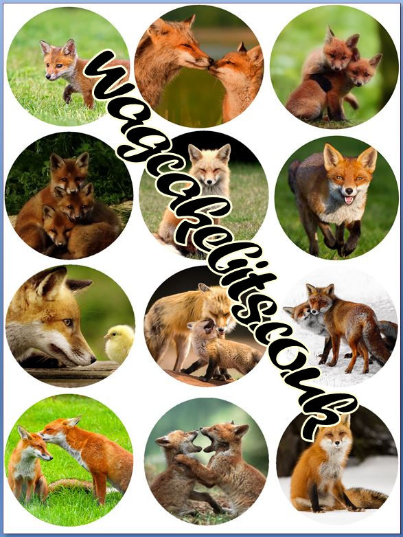 Foxes all different Cupcake Toppers X 12