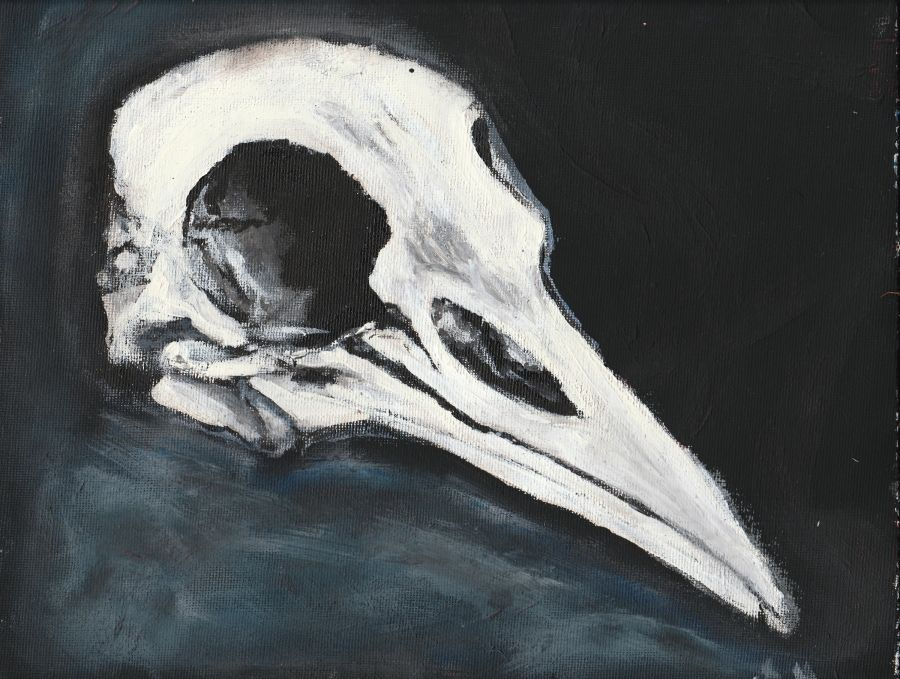 Bird Skull Black And White Acrylic Painting