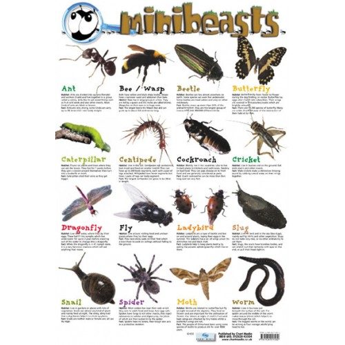 Minibeasts Poster