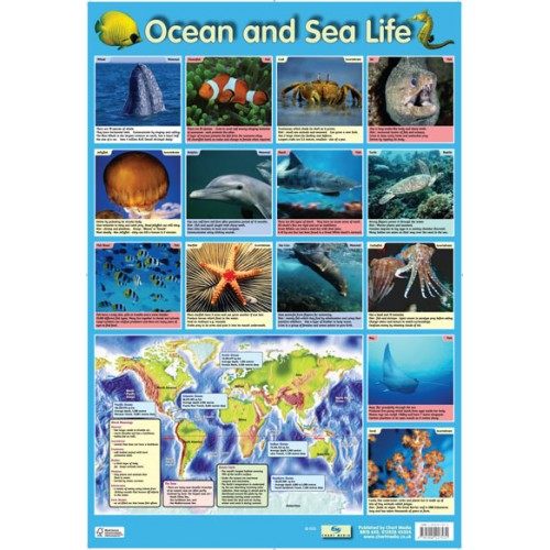 Ocean And Sea Life Poster