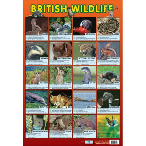 British Wildlife Poster