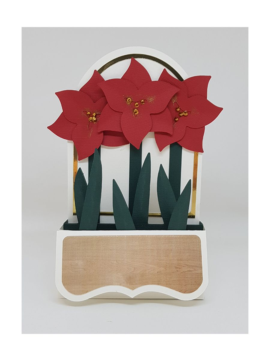 Amaryllis Box Card