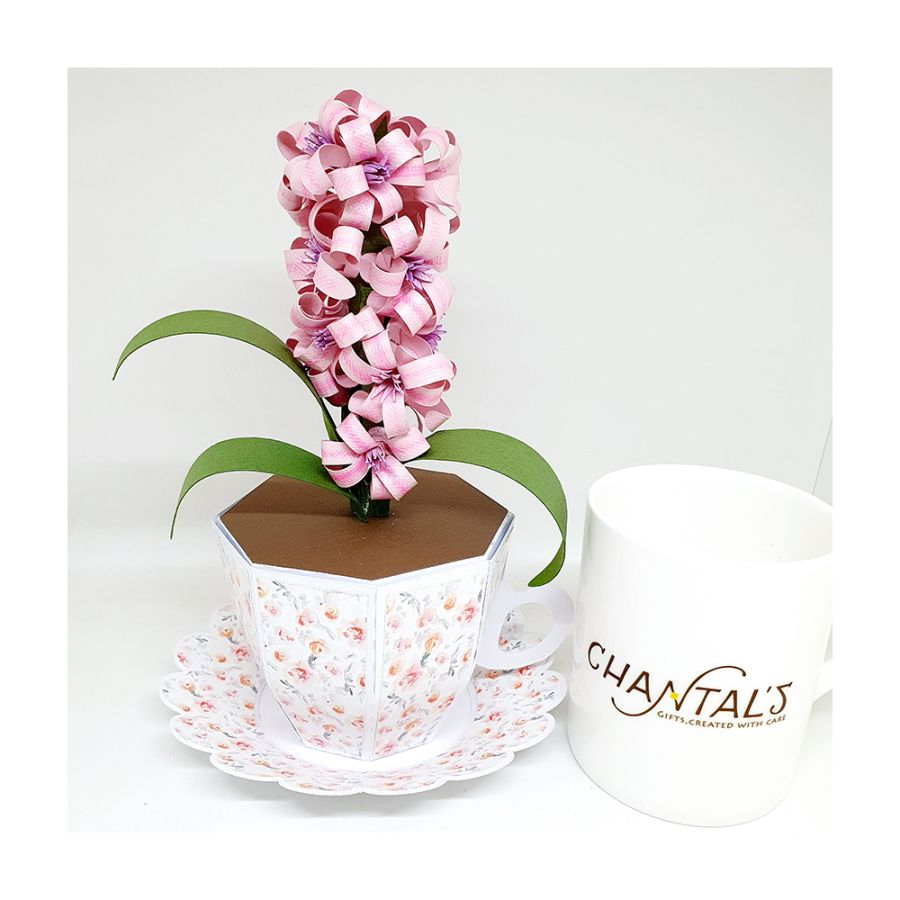 Hyacinth in a Tea Cup Gift Box