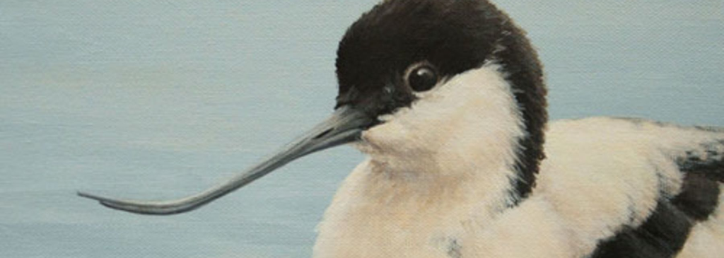 Avocet Bird Painting