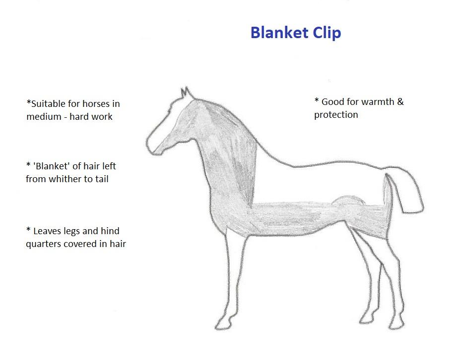 Blanket Clip