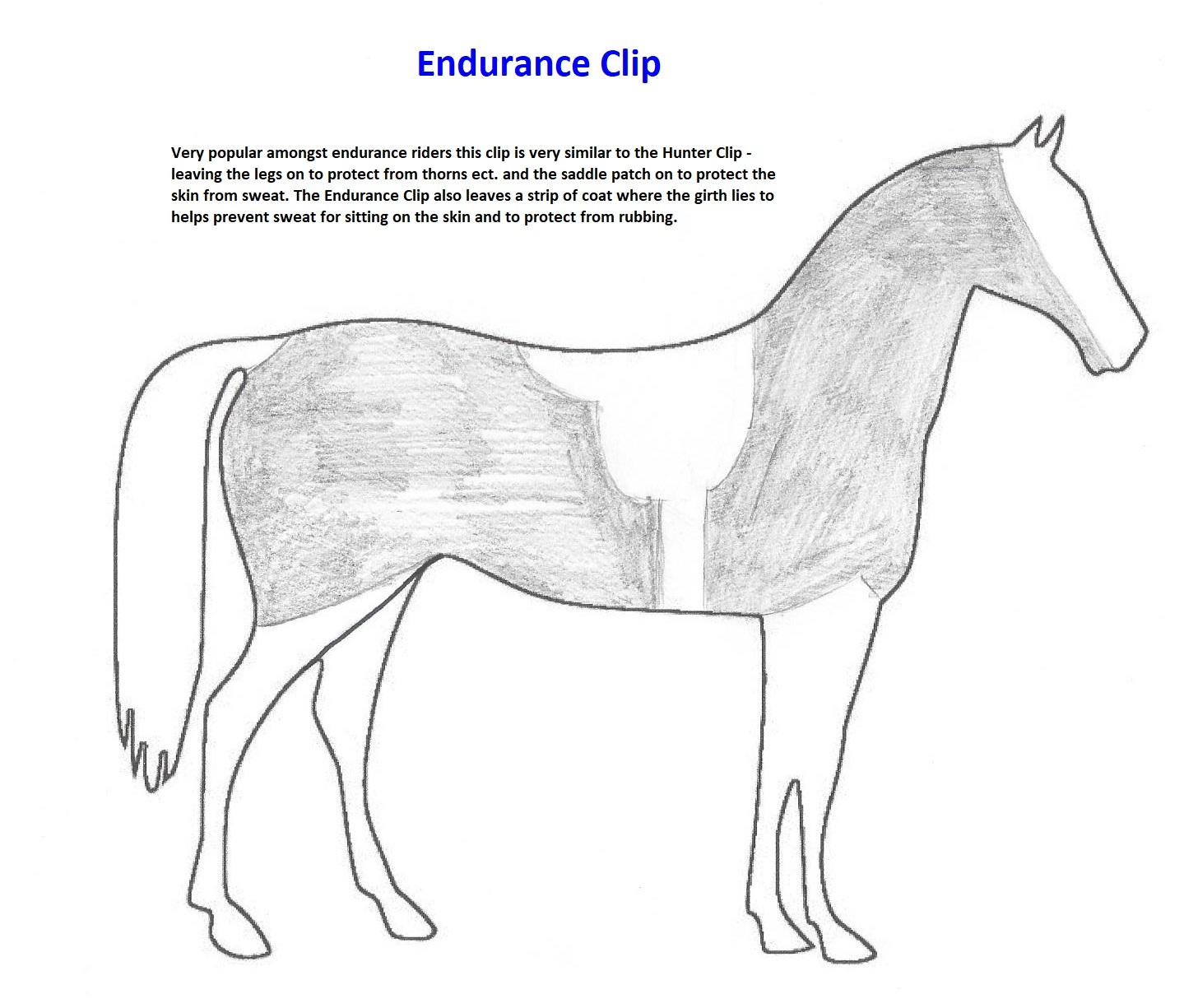 Endurance Clip