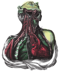 Anatomical dissection engraving