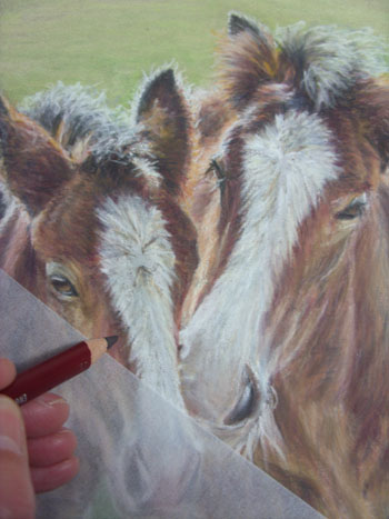 Shire foals in pastel