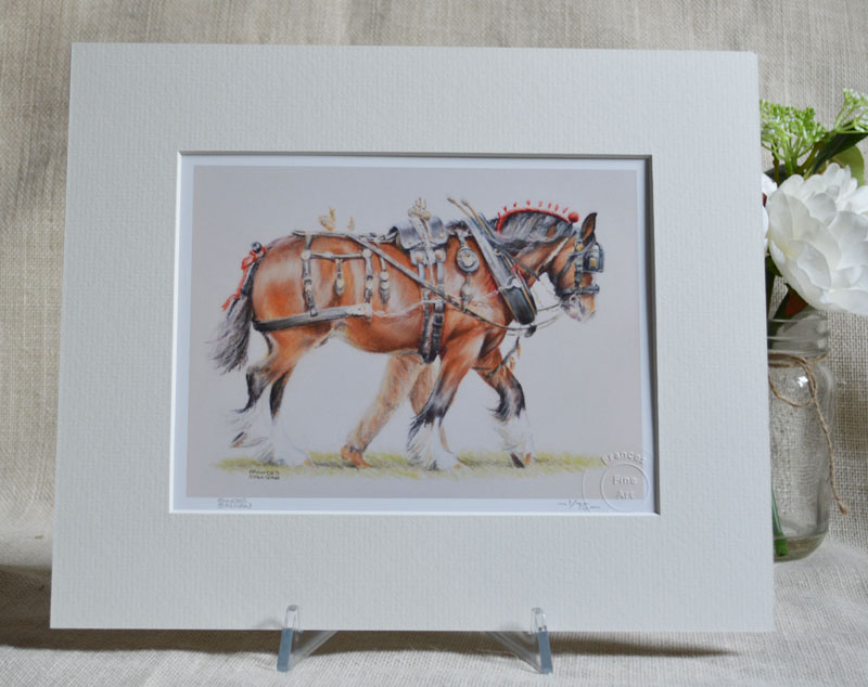 Trotting Up - Shire Horse
