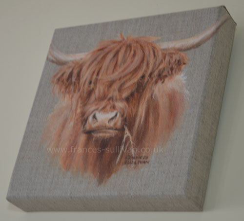 Young Highland Cattle original painting